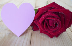 Red rose 14 Royalty Free Stock Images