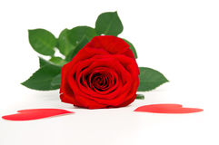 Red rose flower with hearts Royalty Free Stock Photography
