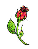 Red rose flower is isolated on a white background. Rose drawing front view. Handwork by felt-tip pens. The sketch for a tattoo Royalty Free Stock Photography