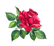 Red rose with leaves. Watercolor for wedding, save date card Stock Photos