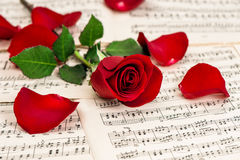 Red rose flower. Music notes sheet Royalty Free Stock Image