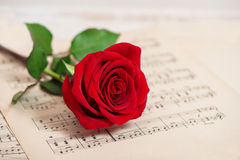 Red rose flower music notes sheet Stock Image