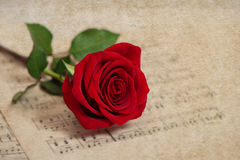 Red rose flower and music notes sheet. Grungy texture. Selective focus Stock Image