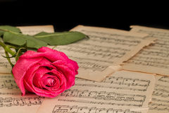 Red rose flower and music notes sheet. stock photography