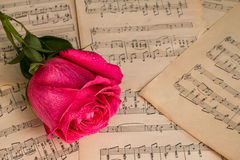 Red rose flower and music notes sheet stock images