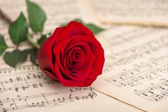Red rose flower music notes sheet Holidays background Royalty Free Stock Photos