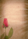 Red rose flower old grunge paper Royalty Free Stock Image