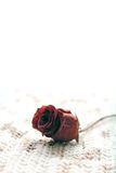 Red rose flower over a white background Royalty Free Stock Photos