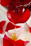 Red rose flower with rose oil. Red rose flower in with rose oil drop Stock Photography