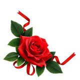 Red rose flower and silk ribbon arrangement Stock Photography