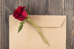 Red rose flower in a torn paper envelope. stock photos
