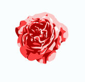 Red rose flower vector Stock Image