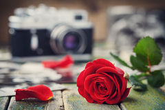 Red rose flower and vintage camera on wooden board, photography concept Royalty Free Stock Image