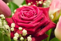 Red rose flower with waterdrops in bouquet. Macro photo. Red rose flower with waterdrops in bouquet. Beautiful background stock images