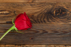 Red rose flower in wood texture background. Horizontal shot Stock Photography