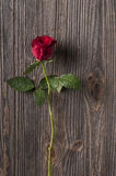 Red rose flower on a wooden background. Stock Photos