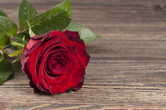 Red rose flower on a wooden background. Royalty Free Stock Photo