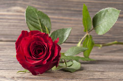 Red rose flower on a wooden background. Royalty Free Stock Photos