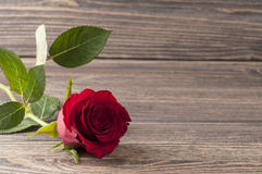 Red rose flower on a wooden background. Stock Images