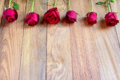 Beautiful red roses for valentine. royalty free stock photo