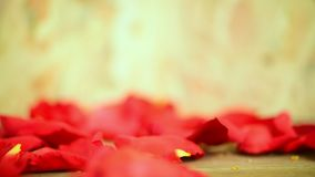 Red rose flower on wooden floor in Valentine`s Day. Red rose flower nature beautiful flowers from the garden and petal of red rose flower for valentines on stock video footage