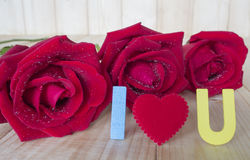 Red rose 48 Stock Images