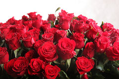 Red rose flowers Stock Images