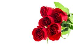 Red rose flowers bouquet white background. Red rose flowers bouquet isolated on white background stock photo