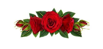 Red rose flowers, buds and leaves in floral line arrangement Stock Photos