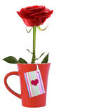 Red rose flowers in a cup Stock Images