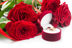 Red rose flowers and golden rings Royalty Free Stock Images
