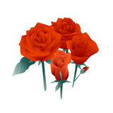 Red Rose Flowers royalty free illustration