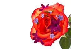 Red rose with flowers hyacinth Stock Photo