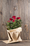 Red rose flowers in paper-bag on a wooden background Stock Photos