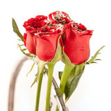 Red rose flowers with sparkle particles. Beautiful red rose flowers with sparkle particles stock photo