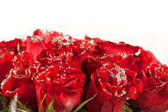 Red rose flowers  with sparkle particles Royalty Free Stock Images