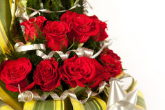 Red rose flowers  with water drops Stock Photos