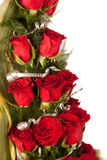 Red rose flowers  with water drops Royalty Free Stock Photo