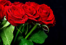 Red rose flowers with water drops over dark background Royalty Free Stock Images