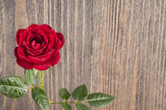 Red rose flowers on a wooden background Stock Image