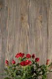Red rose flowers on a wooden background Royalty Free Stock Images