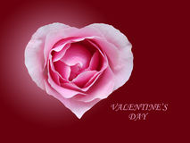 Red rose in form heart. Rose in form heart on dark background stock photo