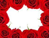Red rose frame Royalty Free Stock Images