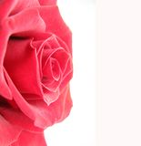 Red rose frame on left side Stock Photography