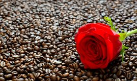 Red Rose on fried coffee beans background with space for Valent stock photo
