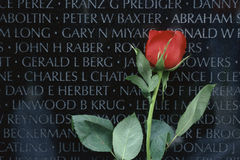Red rose in front of Vietnam Veterans Memorial Stock Photography