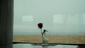 Red rose in front of the window on the train. And lake royalty free stock image