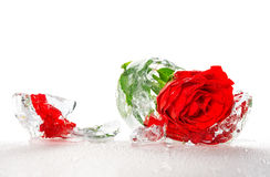 Red rose frozen in an ice Stock Images