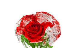 Red rose frozen in an ice Royalty Free Stock Photo
