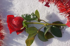 Red rose and garland on snow. Royalty Free Stock Photography
